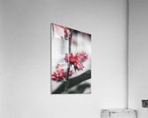 spiked flower  Acrylic Print