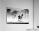 horse herd dust nature wild  Acrylic Print