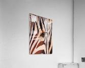 Zebra Eye 1873  Acrylic Print