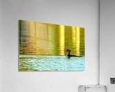 Merganser In Setting Sun  Acrylic Print