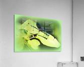 libellule  Acrylic Print