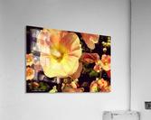 Mid Summer Blossom  Acrylic Print