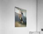 Great Blue Heron At Rest  Acrylic Print