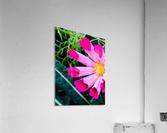 Flowers are gorgeous   Impression acrylique