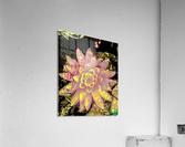 Pink fire lotus   Impression acrylique