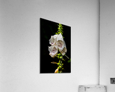 Foxgloves Flowers  Acrylic Print