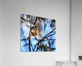 Serenity  Acrylic Print