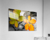 The Other  Acrylic Print