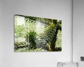 Plant Image  Acrylic Print