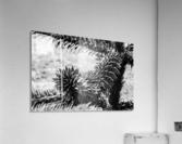 Plant Image BW  Acrylic Print