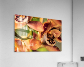 Blush Orchids  Acrylic Print