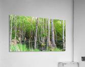 Swamp in Carolina  Acrylic Print