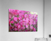 Pink Flowers Photograph  Acrylic Print