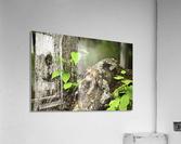 Chipmunk on tree  Acrylic Print