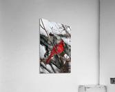 Vertical Cardinal  Acrylic Print