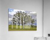 Lone Settler  Acrylic Print