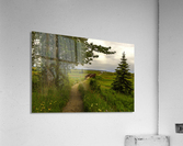 Walking Home  Acrylic Print