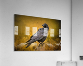 Black Crow  Acrylic Print