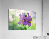 Purple Flowers Photograph  Acrylic Print