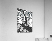 Wandering Abstract Line Art 02: Grayscale  Acrylic Print