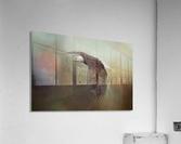 Majestic  Acrylic Print