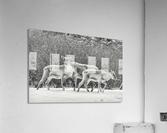 The Trio  Acrylic Print
