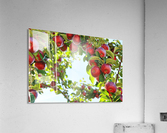 Apples Orchard- Harvest  Acrylic Print