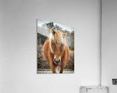 Assateague Horse Miekes NoeLani  Acrylic Print