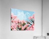 Blush Blossom II  Acrylic Print