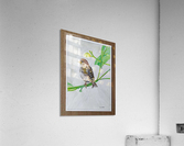 Sparrow_DKS  Impression acrylique