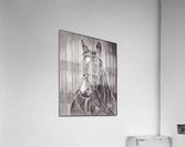 Horse_DKS  Impression acrylique
