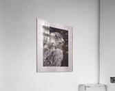 Falcon_DKS  Impression acrylique