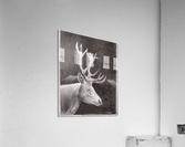 Stag_DKS  Impression acrylique