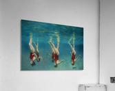 swimmers  Acrylic Print