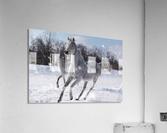 Horses in the Snow  Acrylic Print