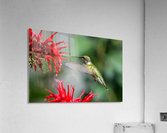 The Happy Bird  Acrylic Print