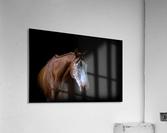 Studio Horses  Acrylic Print