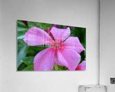 Floral Photograph   Acrylic Print