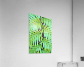 Fern Leaves  Acrylic Print