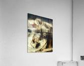 Entwine  Acrylic Print