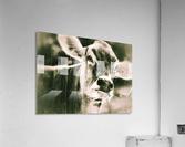 Gitane  Acrylic Print