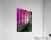 Windblown Blossom  Acrylic Print