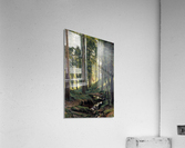 Stream by a forest slope  Acrylic Print