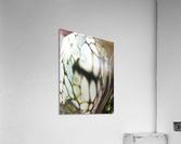 fractral  Acrylic Print