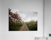Chemin fleuri  Impression acrylique