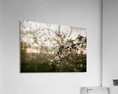 Fleurs de pommes  Impression acrylique