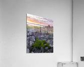 Ciboulette  Impression acrylique