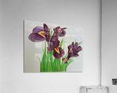 Irises  Impression acrylique