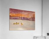 Cumbrian winter   Acrylic Print