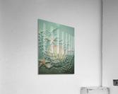 Starfish Image Art  Acrylic Print